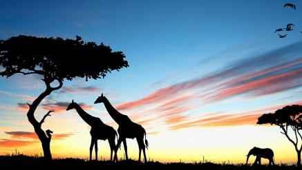 Lendas Sul Africana com Extensão a Garden Route