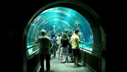 Aquário e Museu do Amanhã/RJ