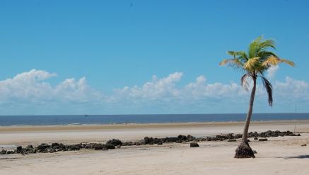 Ilha de Marajó e Belém/PA