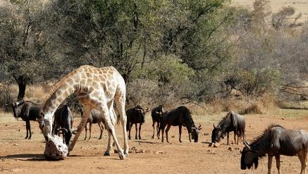 Escapada Sun City e Pilanesberg